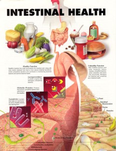 intestinal_health